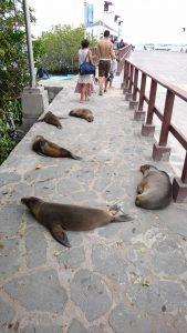 エクアドル本土から約1,000㎞離れたガラパゴス諸島。動物には警戒心がほとんどありません。